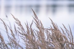 Autumn colored grass on the shore of lake - vintage film look. Autumn colored grass on the shore of lake in overcast day - vintage film look stock photo
