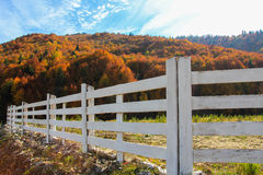 Autumn colored landscape Royalty Free Stock Image