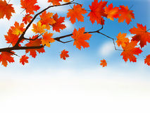 Autumn colored leaf on blue sky. Stock Photos