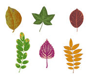 Autumn colored leaves Royalty Free Stock Photo
