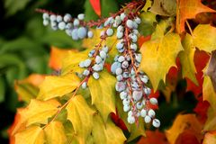 Free Autumn Colored Leaves Royalty Free Stock Images - 41628969