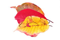 Autumn colored leaves Stock Photo