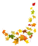 Autumn colored leaves falling Royalty Free Stock Images