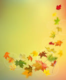Autumn colored leaves falling Royalty Free Stock Photography