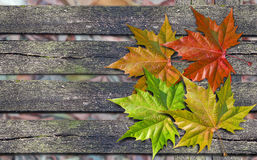 Autumn colored leaves over wooden bench with copy space. Autumn colored leaves over wooden bench with stock photography