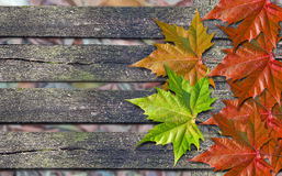 Autumn colored leaves over wooden bench with copy space. Autumn colored leaves over wooden bench stock image