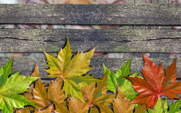 Autumn colored leaves over wooden bench with copy space. Autumn colored leaves over wooden bench royalty free stock photography
