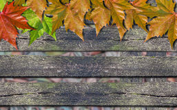 Autumn colored leaves over wooden bench with copy space. Autumn colored leaves over wooden bench royalty free stock images