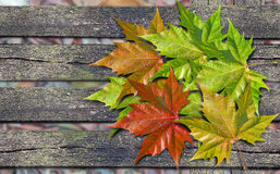 Autumn colored leaves over wooden bench with copy space. Autumn colored leaves over wooden bench stock photos