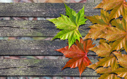 Autumn colored leaves over wooden bench with copy space. Autumn colored leaves over wooden bench stock photo