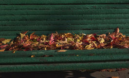 Autumn colored leaves on a Park bench on a Sunny day Stock Image