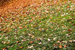 Autumn colored leaves in Teplice, Czech Republic stock images