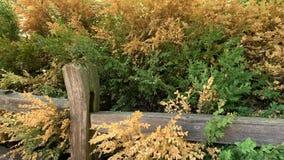 Autumn Colored Leaves visuel dans le vent dans le clip vidéo d'automne avec la barrière rustique banque de vidéos