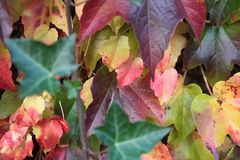 Autumn colored leaves. On the wall stock photos