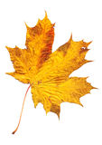 Autumn colored leaves Stock Image