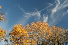 Autumn treetops against brilliant blue sky. The autumn-colored leaves and wispy clouds above both have the wind to thank for their playful forms royalty free stock image