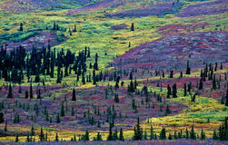 Autumn colored mountainside. In a landscape stock image