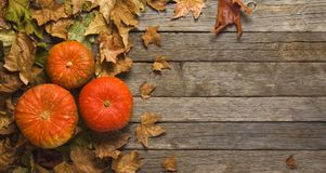 Autumn, colored pumpkins on leaves, old wooden floor, banner Stock Photo
