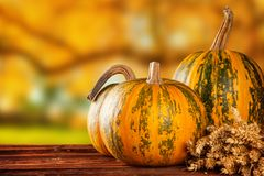 Autumn colored pumpkins on wooden table Royalty Free Stock Image