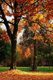 Autumn Colored Trees Royalty Free Stock Image