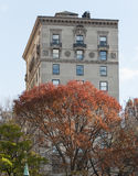 Autumn colored trees with buildings behind them. Photo shot from inside Central Park in New York Stock Images