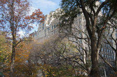 Autumn colored trees with buildings behind them. Photo shot from inside Central Park in New York Stock Photo