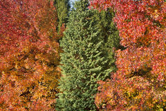 Autumn colored trees Royalty Free Stock Photo