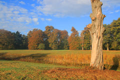 Autumn colored trees in landscape, park Royalty Free Stock Images