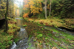 Autumn colors river Stock Images