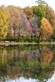 Autumn colored trees next to the water. South Africa royalty free stock photos