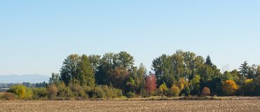 Autumn colored trees on the farm. Autumn colored trees in orange, yellow, green and brown leaves on the farm field stock photo