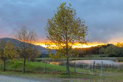 Autumn colored trees at sunrise royalty free stock image