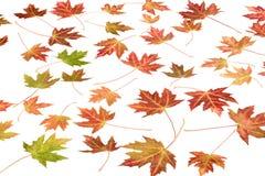 Autumn. Colorful autumnal autumn foliage leaves Royalty Free Stock Photos
