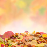 Autumn colorful background Royalty Free Stock Photos