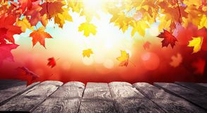 Autumn Colorful Background With Leaves i solljus arkivfoton