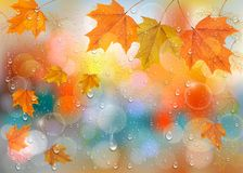Autumn colorful background with leaves and raindrops. On the window. Vector background. Vector vector illustration