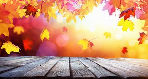 Autumn Colorful Background With Leaves In Sunlight stock photos
