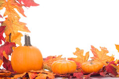 Autumn Colorful Decoration Stock Image