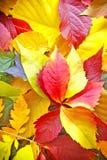 Autumn colorful fallen leaves Stock Photo