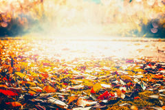 Autumn colorful fallen leaves on sunny day, outdoor Stock Photography