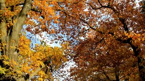 Autumn Colorful Falling Leaves stock foto's