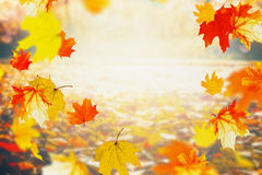 Autumn colorful falling leaves on sunny day, outdoor fall nature background. Frame stock images