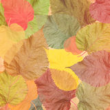 Autumn. Colorful farewell fall Royalty Free Stock Photo