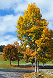 Autumn colorful foliage near mountain road Royalty Free Stock Photography
