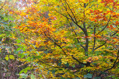 Autumn colorful foliage Stock Photos