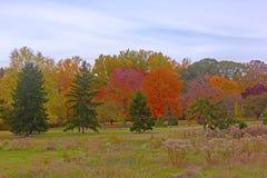 Autumn colorful foliage. US National Arboretum in the Fall, Washington DC Royalty Free Stock Images