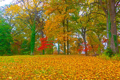 Autumn colorful foliage. US National Arboretum in the Fall, Washington DC Stock Image
