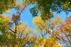 Autumn colorful foliage. US National Arboretum in the Fall, Washington DC Stock Photos