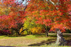 Autumn colorful foliage Stock Image