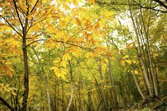 Autumn in colorful forest Stock Photos